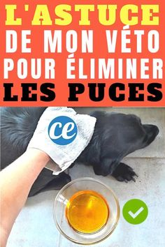 apple cider vinegar to do away with canine fleas Uses For Vicks, Frozen Dog Treats, Cats And Cucumbers, Kitten Care, Pet Health, Yorkshire Terrier, Pet Care, Animals And Pets, Dog Tags