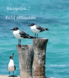 The main natural antidepressants are silence and the sea . Good Morning Quotes For Him, Good Morning Good Night, Beautiful Birds, Animals Beautiful, Natural Antidepressant, Days And Months, Shorebirds, Beach Quotes, Beach Art