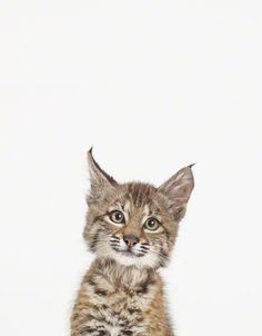 Baby Lynx * * I LUV LYNX. THIS LITTLE GUY IS A HEARTBREAKER.
