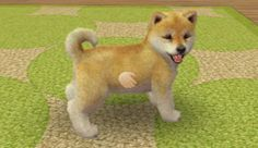 About the Game | nintendogs + cats