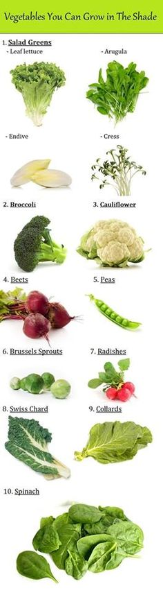 Vegetables that don't need a lot of sun