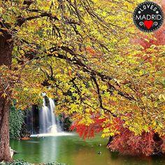 LOVES_MADRID se complace en presentaros: La foto del día El Retiro  Felicidades!!! @juanrigabert Recuerda visitar la galería de nuestr@ fotograf@ destacad@!!   Seleccionada por @ana_y_mas  Sigue a @LOVES_MADRID y etiqueta tus fotos con #LOVES_MADRID para formarparte denuestragalería. Recuerda anotar donde hiciste la foto.  Administradores: @ana_y_mas  @97dnyh97  by loves_madrid
