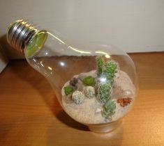 Cool Eco terrarium in a light bulb... site has other neat creative recycling of light bulbs.