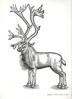 Antique Print Woodcut of Reindeer with by VintageInclination
