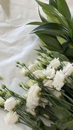 Plant Aesthetic, Flower Aesthetic, White Aesthetic, Nature Aesthetic, Pretty Flowers, White Flowers, White Tulips, Photo Deco, Aesthetic Wallpapers