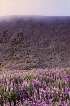 s c o t l a n d • | highlands and thistle |