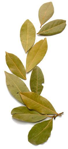 Lee Valley Gardening Articles: Bay leaves rule!