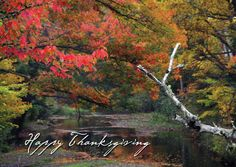 AUTUMN BRIDGE  Vibrant colors of autumn reflect the tranquility of the season. - See more at: http://greetingcardcollection.com/products/holiday-cards-nature-scenic/682-autumn-bridge