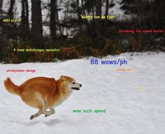 fat doge - Google Search
