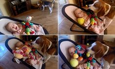 Charlie the dog showers baby with gifts to apologize for stealing toy