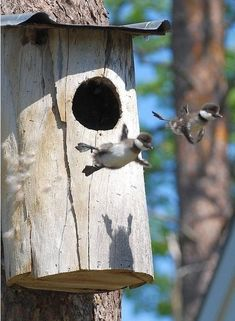 Hypnosis And Fear Of Flying Cute Wild Animals, Adorable Animals, Baby Animals, What Is A Bird, Fear Of Flying, Animal Sculptures, Beautiful Birds, Decoration, Bird Houses
