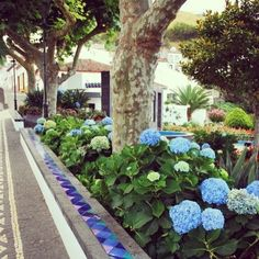 Lush garden in the streets of Sao Miguel island.
