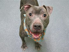 """BISOO""- TO BE DESTROYED TODAY BY NYC ACC -TUES. -1/3/17- AVAILABLE AT MANHATTAN ACC -#A1100519- urgentpodr.org."
