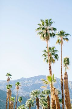 Modernism Week in Palm Springs with HauteLook | M Loves M
