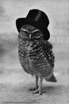 Oh hello, Mr. Owl. @Brenna Faris