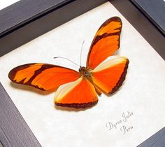 The Julia Butterfly Halloween Decoration by REALBUTTERFLYGIFTS, $29.99