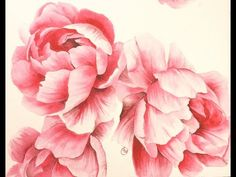 Watercolor Peonies - Hot Pressed 300lb - Painting Demonstration - YouTube
