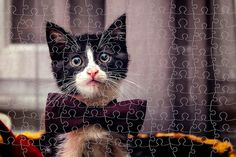 1000 Pieces Custom Jigsaw Puzzle Cute Cat Dog by DigitalPalace