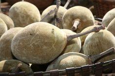 Baobab fruit seed