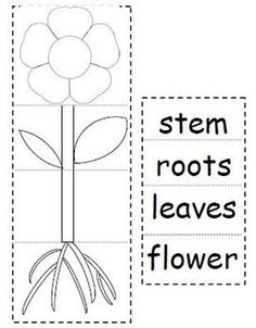 Plant Parts Flip Book Have students cut and paste to create a plant flip book! Students practice identifying the parts of plants and their respective jobs in helping the plant to grow. 1st Grade Science, Kindergarten Science, Science Classroom, Teaching Science, Science For Kids, Science Worksheets, Science Lessons, Science Activities, Preschool Lessons