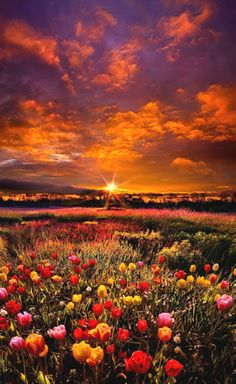 """Bear Witness to the Light""  by :Phil Koch."