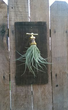 Air plant spigot wall decor, plant not included. Wood measures approximately 12 long and 6 wide. Stained and sanded. Brass spigot makes an awesome planter. The wood can be customized any color. This is a wonderful unique addition to any decor.