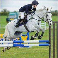 *REDUCED* SUPER JUMPING HORSE - 16.1 hh gelding fleabitten grey http://www.equineclassifieds.co.uk/Horse/161-hh-gelding-fleabitten-grey-listing-631.aspx#.U6q4TEATCZY