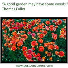 Gardening Quote: Love the Weeds Too