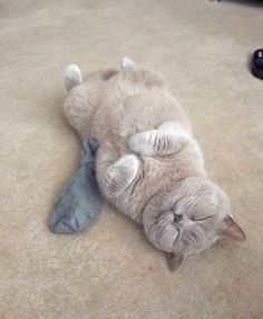 """Kitty has had too much catnip…. Zzz…    """"In case it isn't obvious, the catnip is in the sock. If there was a fire she'd save that sock over her kittens. If she had kittens, which she doesn't,"""" said Jess over reddit."""