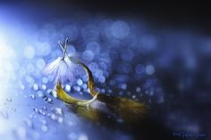 Secret Love by Lafugue Logos   on 500px