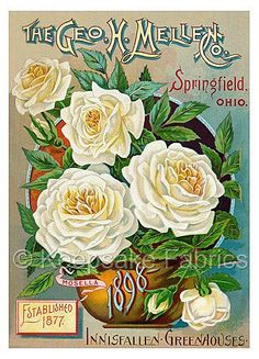 Vintage White Roses Seed Packet Quilt Block Multi SizeGET 2 2X3 AND PUT IN WHITE HANGING FRAME ?FrEE ShiPPinG WoRld WiDE