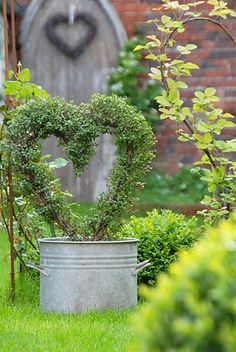 heart shape topiary galvanized bucket, green vines. wood and brick wall very appealing