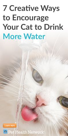 7 Creative Ways to Encourage Your Cat to Drink More Water