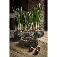 Vagabond Vintage Cement Log Planter - Set of Shaped Concrete Pots with Bark-like Detailing and sold in one large and one small. Product Description Large Dimensions: x x Small Dimensions: x x SKU: CE-BOIS Brand: Vagabond VintageKokedama un toqu Concrete Pots, Concrete Planters, Stamped Concrete, Garden Landscape Design, Garden Landscaping, Log Planter, Plant Crafts, Concrete Crafts, Plantation