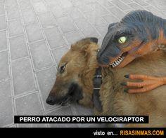 Perro atacado por un velociraptor.