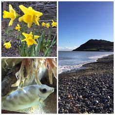 A day out in Bray. With daffodils. Wow. How early is that!