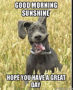 Good Morning Sunshine, Hope You Have A Great Day