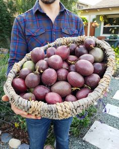 How to Grow Purple Passion Fruit vs. Maypops: The Ultimate Guide ~ Homestead and Chill - tropical garden ideas Fruit Plants, Fruit Garden, Edible Garden, Tropical Garden, Fruit Trees, Trees To Plant, Vegetable Garden, Growing Passion Fruit, Yellow Passion Fruit