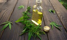 CBD is short for cannabidiol. The ingredient is growing faster than it ever has. CBD is part of a family of cannabinoids that are produced Right Cbd Oils Lund, Oil Industry, Hemp Oil, Medical Marijuana, Natural Health, Canning, Action, Juul Vape