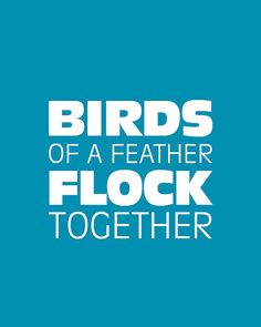 Birds of a feather flock together (one of my favourite phrases of ALL TIME)