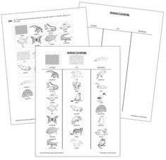 Dinosaurs (Set 2): Includes 25 Dinosaur Cards and 25
