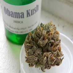 The Obama Kush strain is an indica-dominant strain that comes as a result of crossing Afghani and OG Kush. Unlike most indica strains, it produces a decent amount of head high, along with the usual body high that comes with an indica.