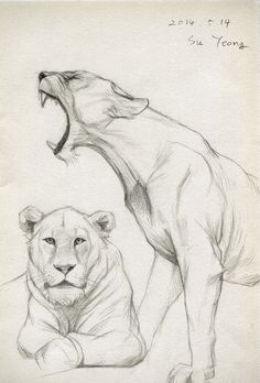 Draw 2014.05.14 by Kimsuyeong81 on deviantART #lion #drawing #sketch