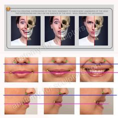 Anatomy For Sculptors Facial Anatomy, Head Anatomy, Anatomy Poses, Drawing The Human Head, Human Anatomy Drawing, Human Reference, Anatomy Reference, Figure Reference, How To Draw Tears