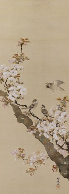 Sparrows in Cherry Blossom, Ito Rojo (-1948), Japanese scroll painting.