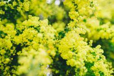 Negative Space   #stock #freeforpersonal #freeforcommercial #noattributes #colour #nature #flowers #closeup #blurry #copyspace