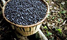 Wszystko o tym cudownym owocu. Poradnik jak kupić najlepsze produkty z cudownymi energetycznymi acai berry