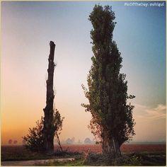 La #PicOfTheDay #turismoer di oggi si immerge nella quiete dei paesaggi emiliani al #crepuscolo. Complimenti e grazie a sfrigul / Today's #PicOfTheDay #turismoer enjoys the quiet of #Emilia's countryside at #dusk. Congrats and thanks to sfrigul