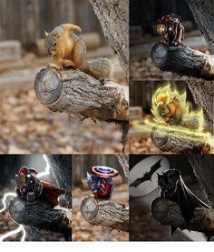 Avanger-Squirrel