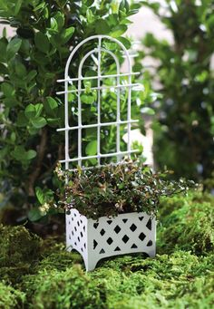 Jeremie | Mini garden white trellis and planter.